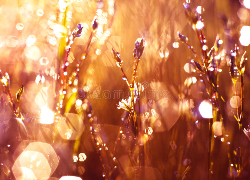 Download Цветок в росе стоковое изображение. изображение насчитывающей яркое - 40581841