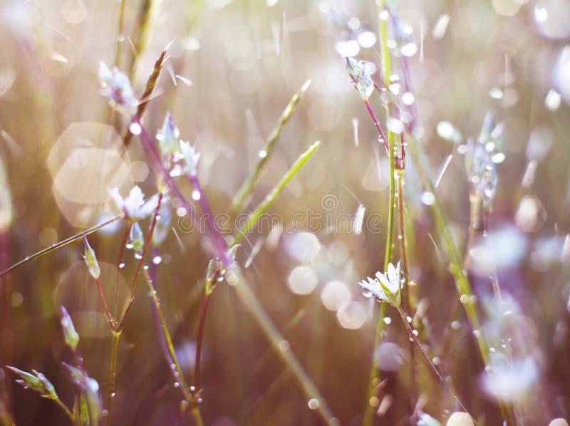 Download Цветок в росе стоковое фото. изображение насчитывающей пуща - 40581852
