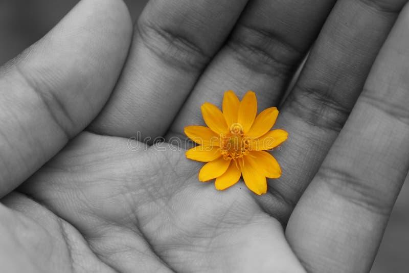 Цветок в руке стоковое изображение rf
