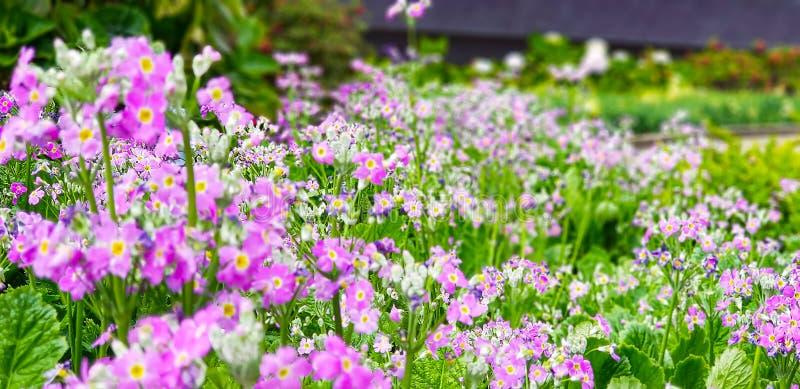Цветок в саде на Таиланде стоковые изображения