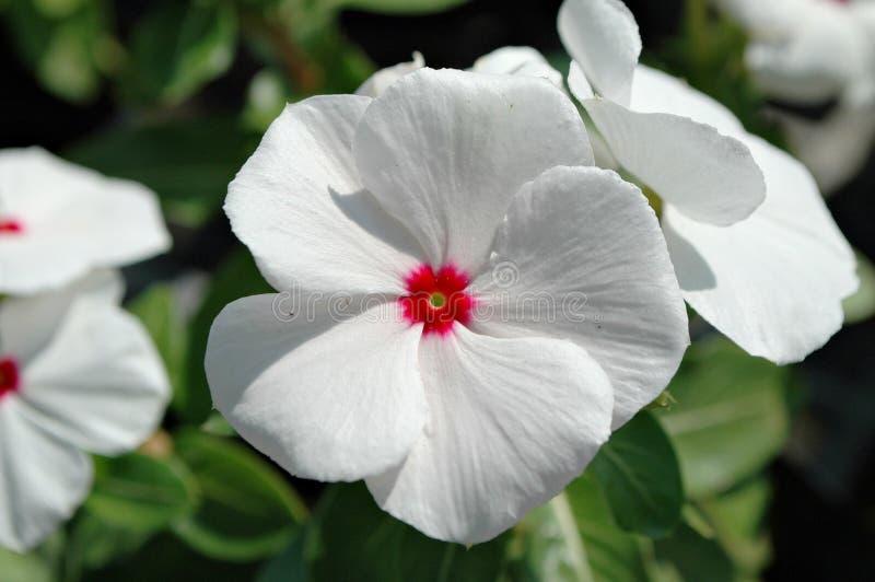Цветок в саде стоковое изображение