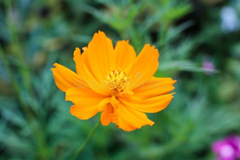 Цветок в саде стоковые фото
