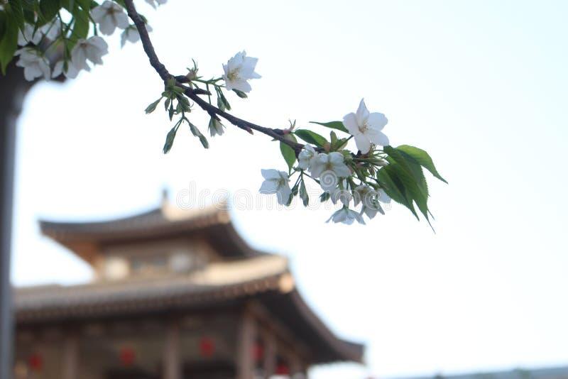 Цветок в старом дворе стоковое фото