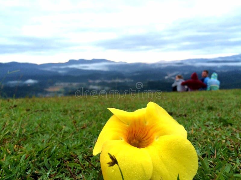 Цветок в утре на горе стоковые фото