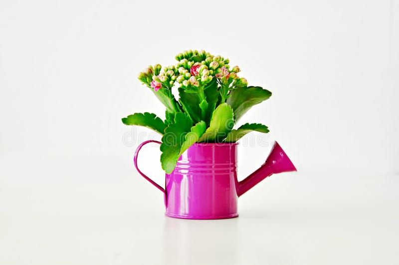 Цветок в фиолетовой моча чонсервной банке стоковые изображения