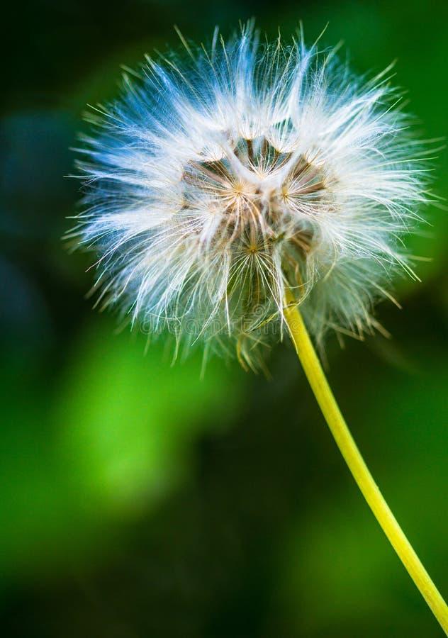 Цветок в цветах стоковая фотография rf