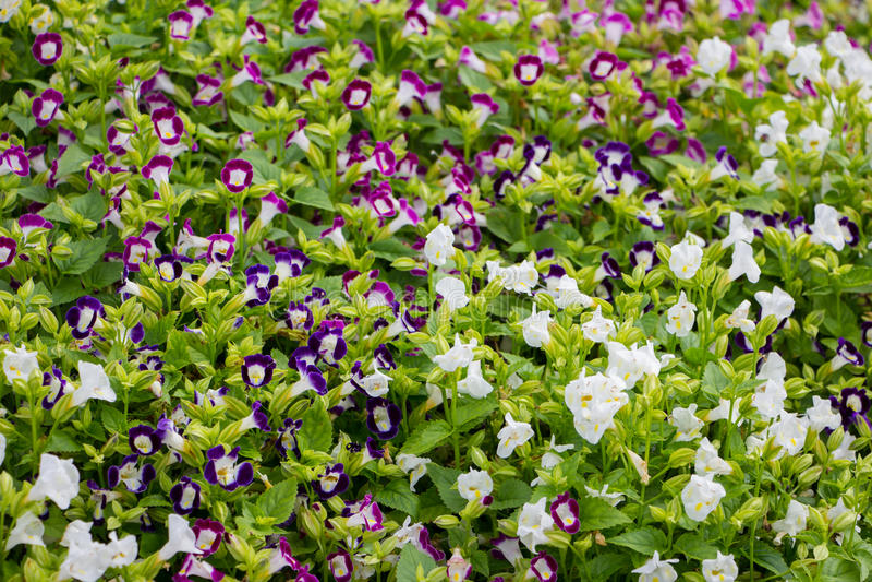 Цветок в chiangmai Таиланде стоковое фото rf