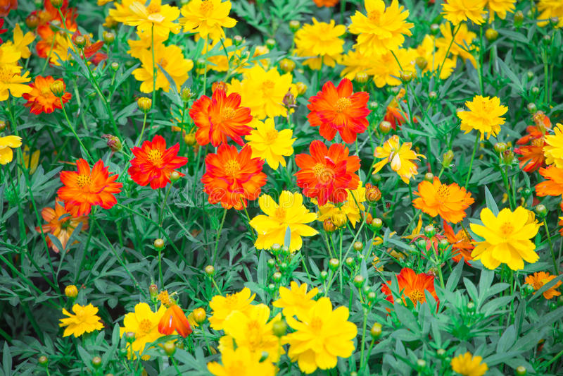Цветок в chiangmai Таиланде стоковые фото
