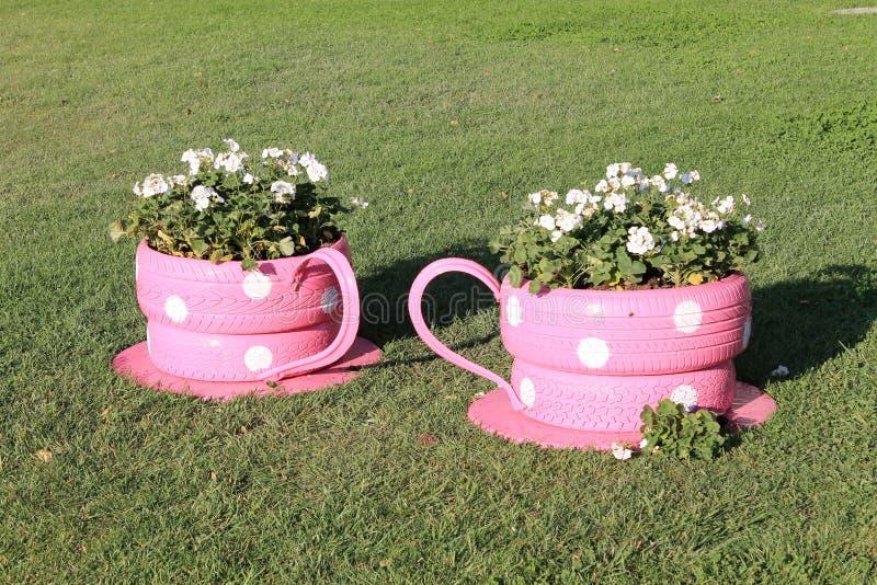 Цветок гераниума растет в первоначально чашках цветника стоковая фотография rf