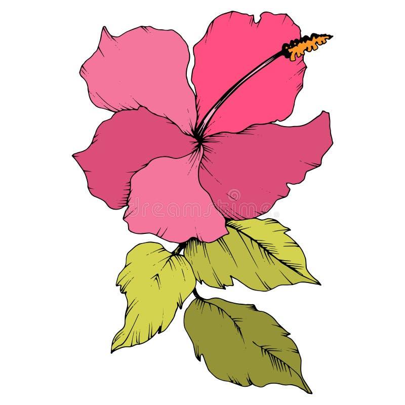 Цветок гибискуса вектора флористический ботанический r Изолированный элемент иллюстрации гибискуса на белой предпосылке иллюстрация вектора