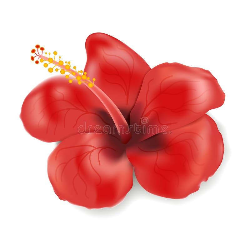 Цветок гибискуса в реалистическом стиле изолированный на белой предпосылке Иллюстрация вектора с красным цветком Каникулы лета тр иллюстрация штока