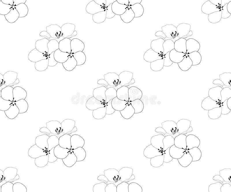Цветок голубых глазов младенца Nemophila на белой предпосылке также вектор иллюстрации притяжки corel иллюстрация штока