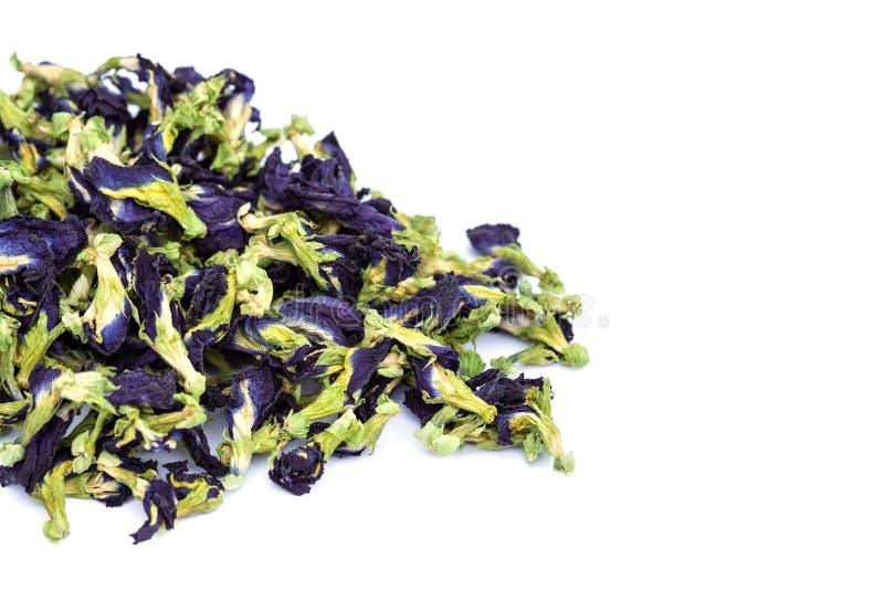 Цветок гороха бабочки дня фиолетовый Студия снятая и изолированная на whi стоковая фотография rf