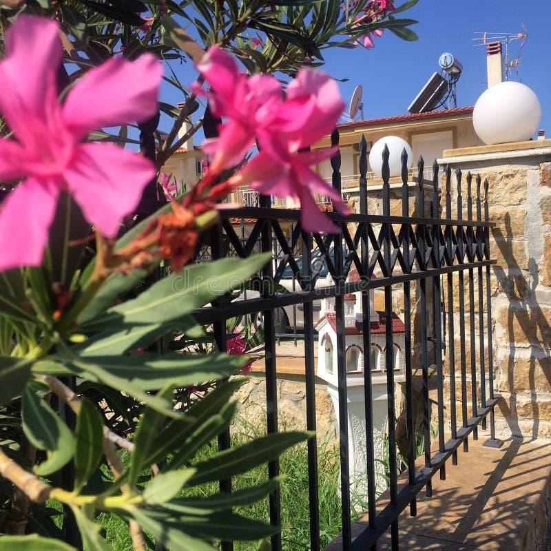 Цветок Греции стоковое изображение rf