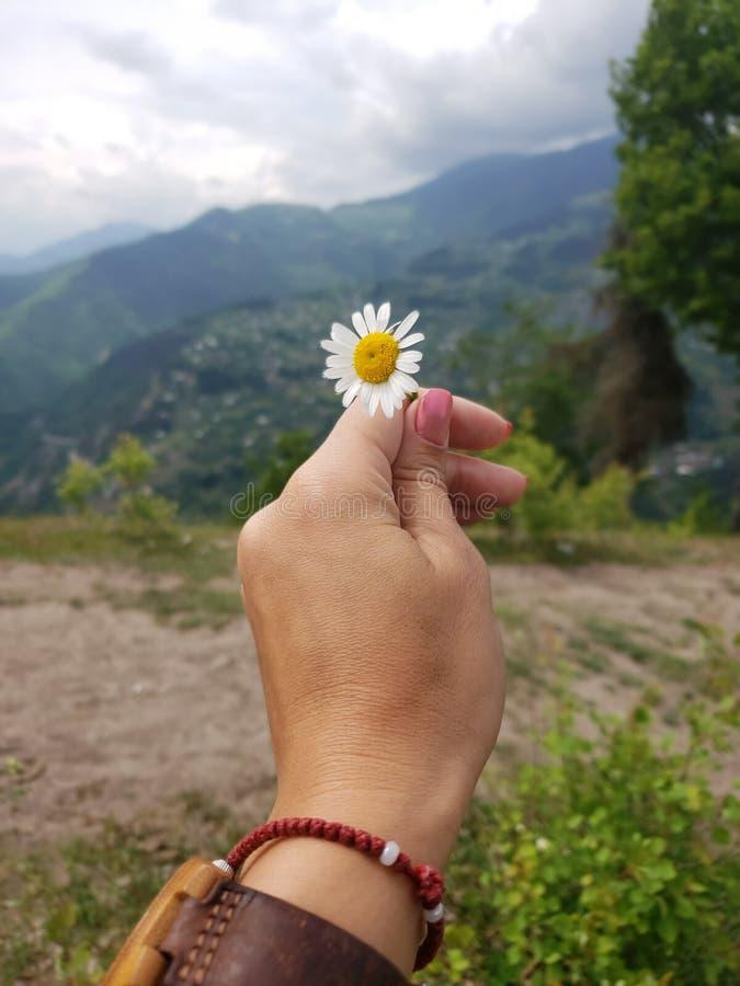 Цветок для вас стоковое фото rf