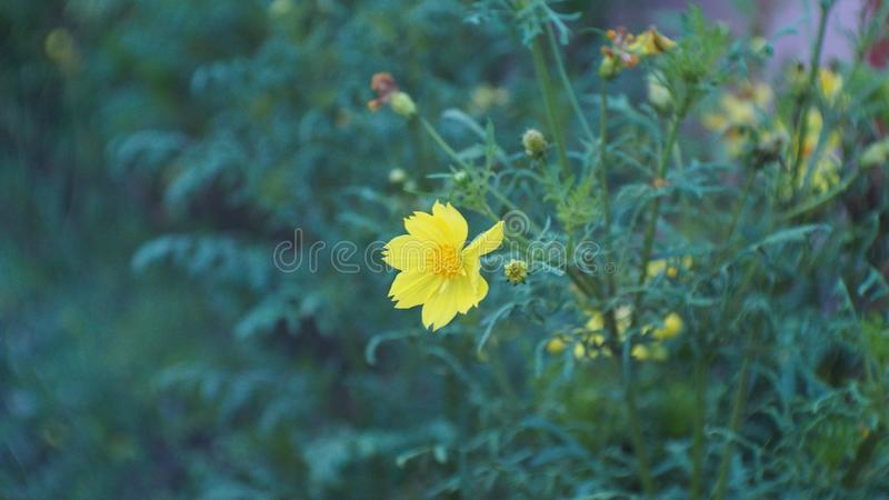 Цветок для влюбленности стоковые фотографии rf