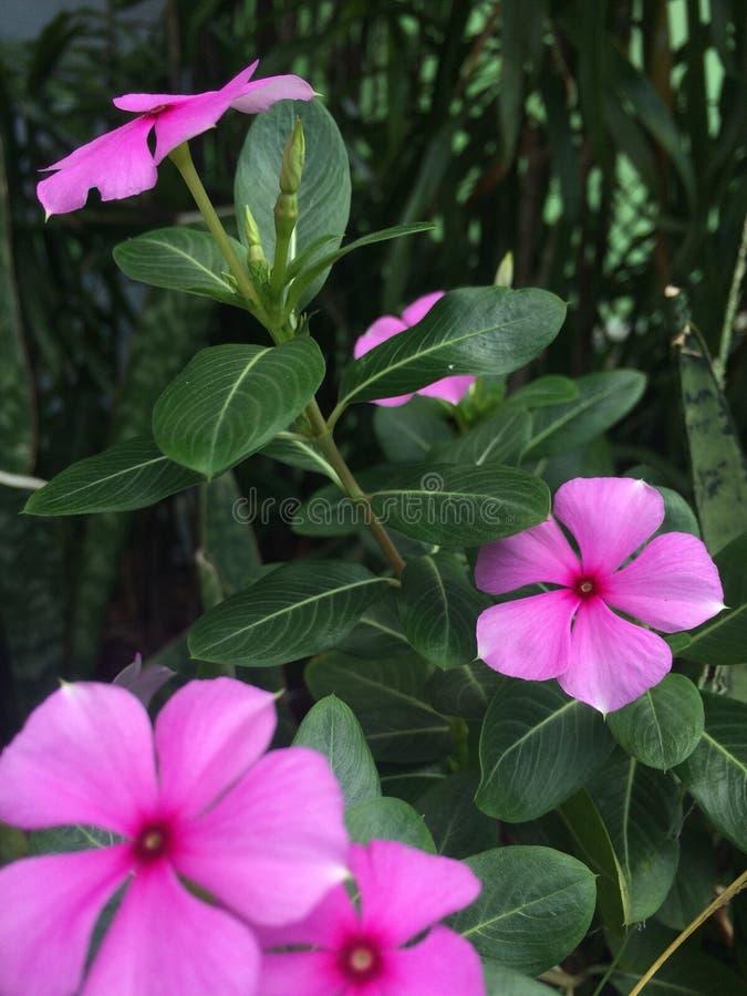 Цветок дней стоковое изображение
