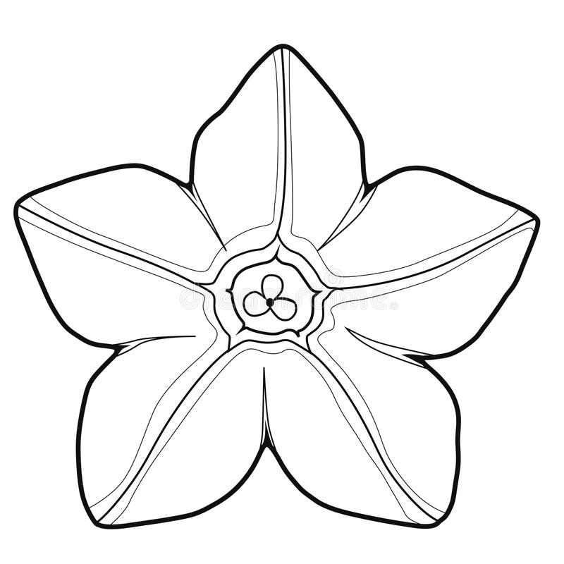 Цветок душистого табака Coloringbook иллюстрация штока