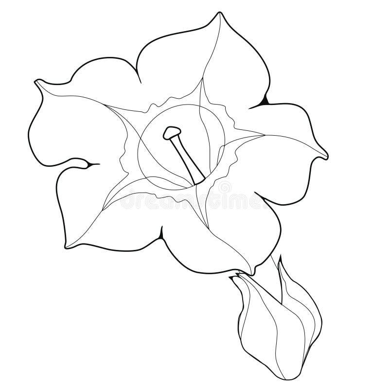 Цветок душистого табака Coloringbook бесплатная иллюстрация