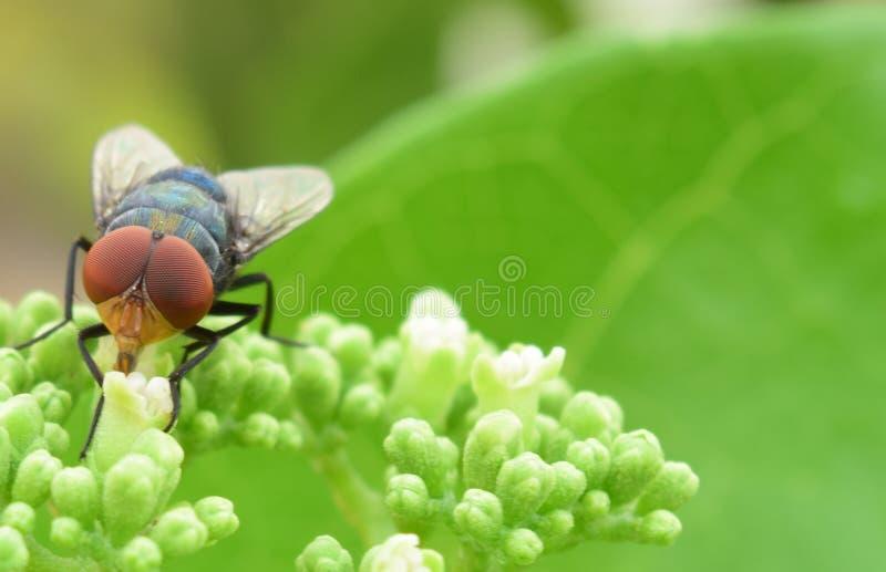 Цветок летает стоковое изображение