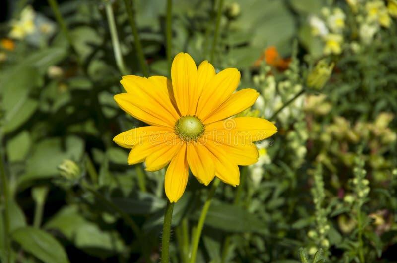 Цветок лета стоковое фото