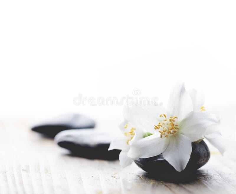 Цветок жасмина на камнях курорта стоковое фото rf