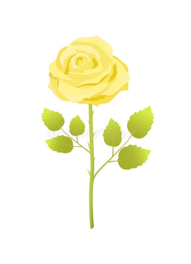 Цветок желтого Розы с листьями зеленого цвета на длинном стержне иллюстрация штока