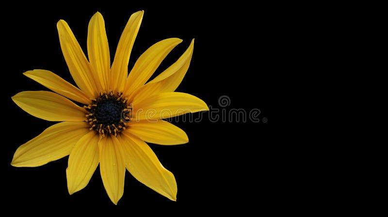 Цветок, желтый цвет, солнцецвет, закрывает вверх