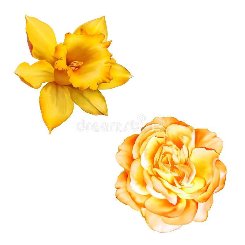 Цветок желтого Розы изолированный на белой предпосылке иллюстрация штока
