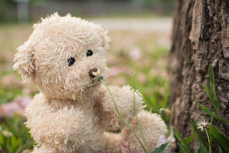 Цветок запаха плюшевого медвежонка стоковое изображение rf