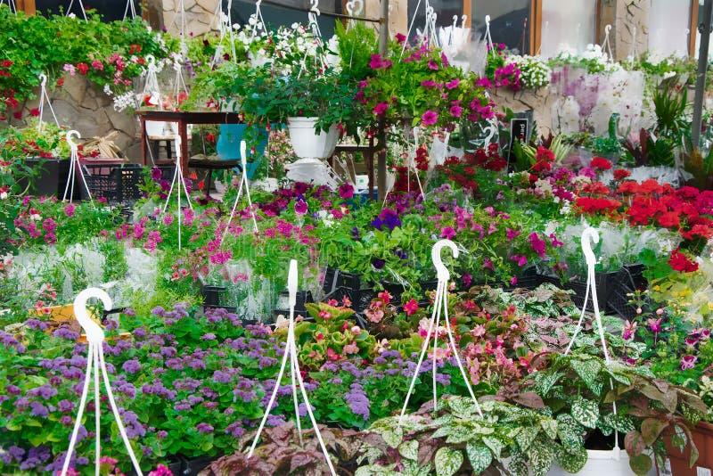 Цветок засаживает рынок стоковые изображения rf