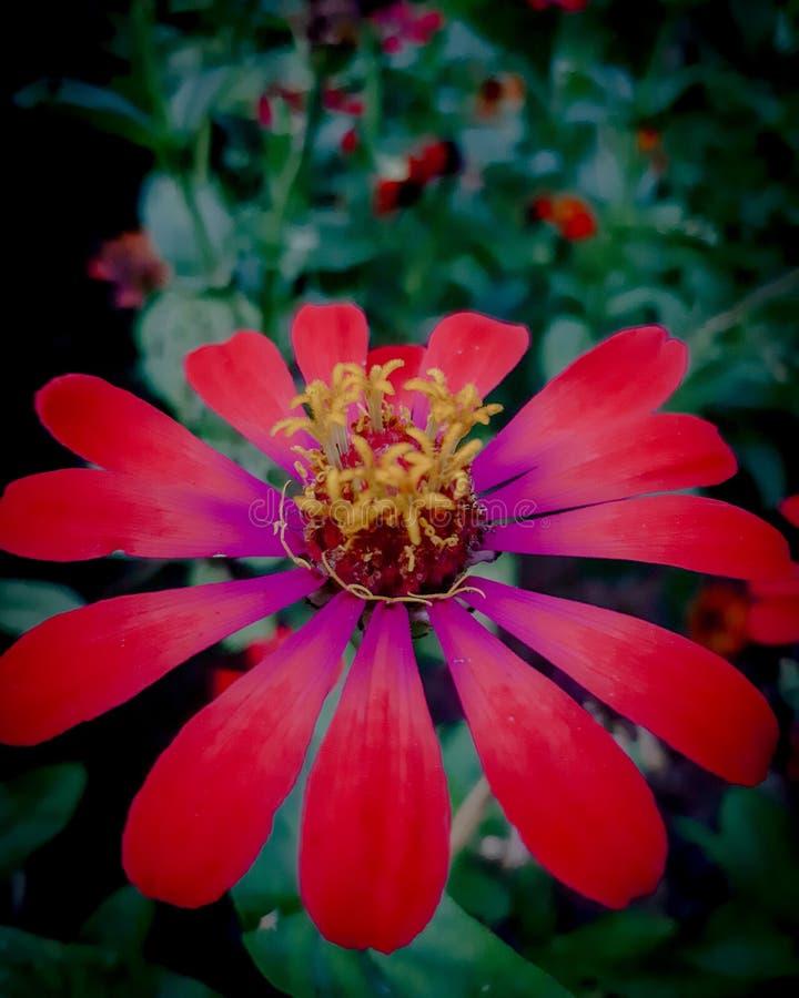 Цветок за домом стоковая фотография