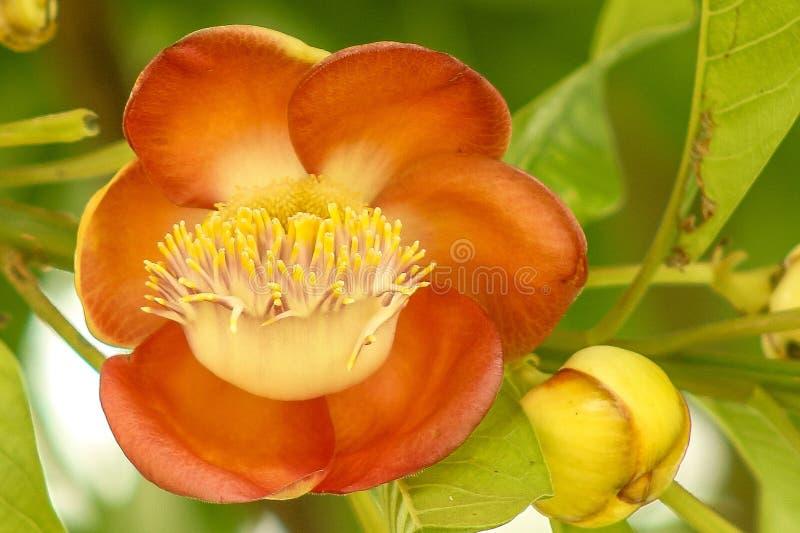 Цветок змейки головной стоковое изображение rf