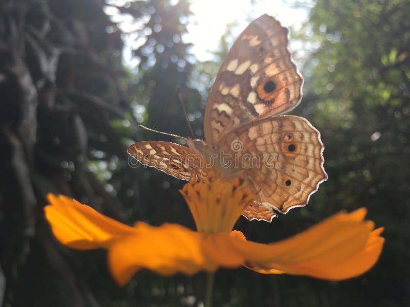 Цветок и бабочка космоса стоковое изображение rf