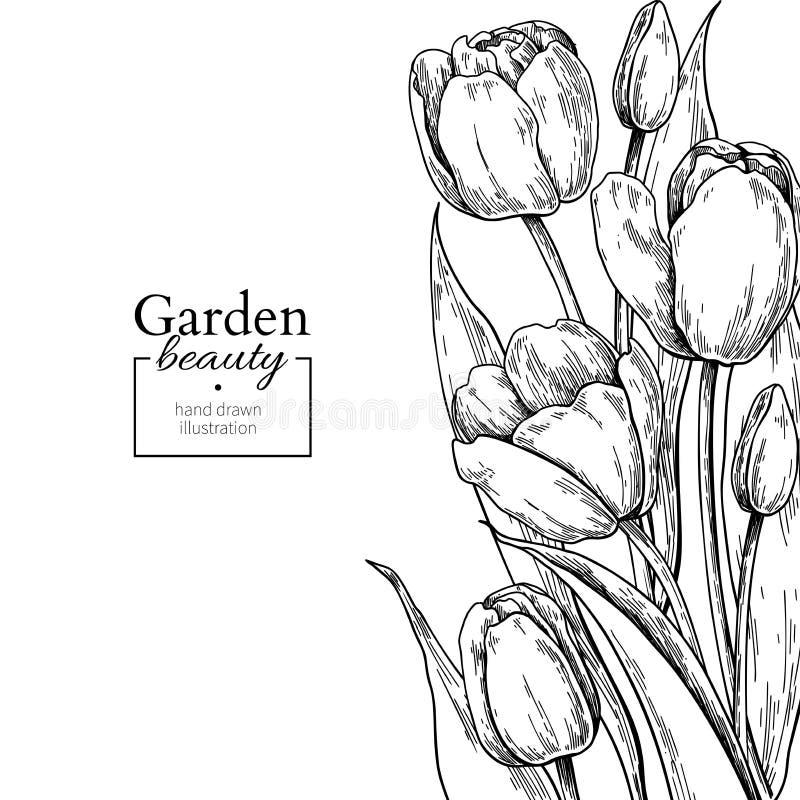 Цветок и листья тюльпана рисуя границу Рамка вектора нарисованная рукой выгравированная флористическая иллюстрация штока