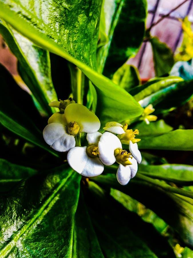 Цветок и муравьи стоковые фото