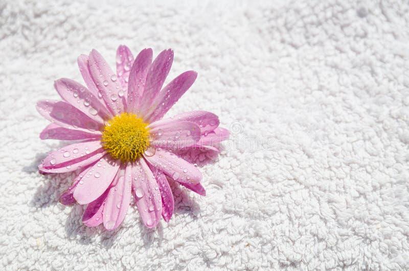 Цветок и полотенце спы влажные стоковые фото
