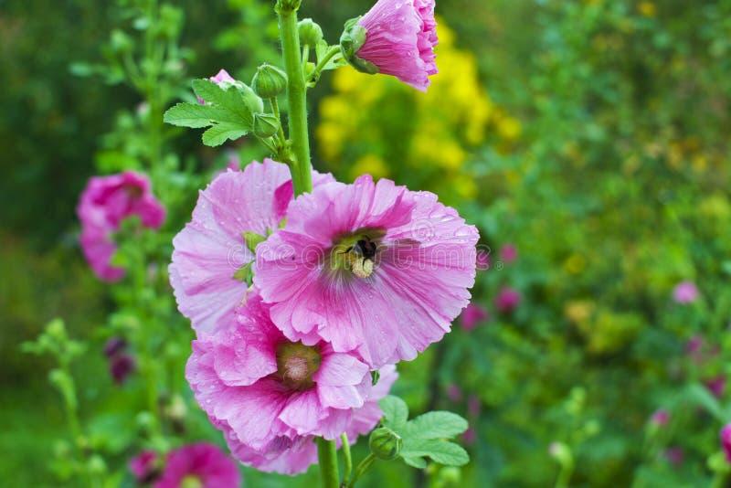 Цветок и пчела стоковая фотография rf