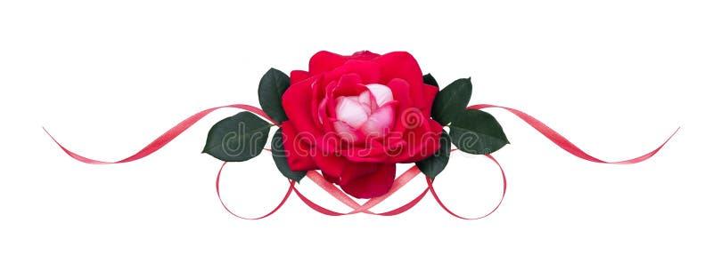Цветок и сатинировка розы пинка развевали ленты стоковое изображение rf