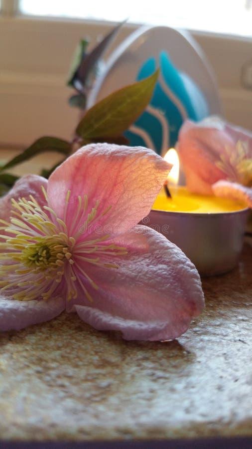 Цветок и свечка стоковые изображения rf
