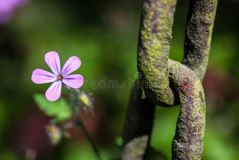 Цветок и цепь стоковые изображения