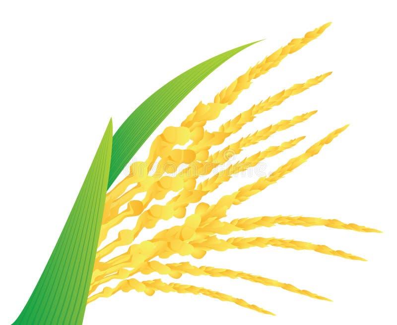 Цветок кокоса иллюстрация вектора