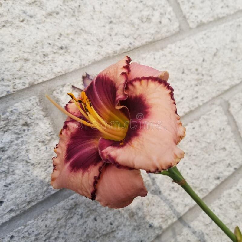 цветок который не хотел стоять вне стоковые изображения rf