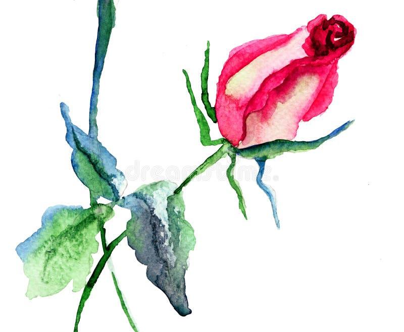 Цветок красного Розы Стоковая Фотография