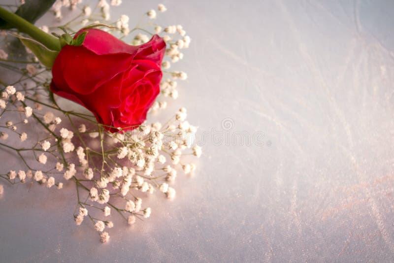 Цветок красной розы, с серебряной предпосылкой стоковое фото rf