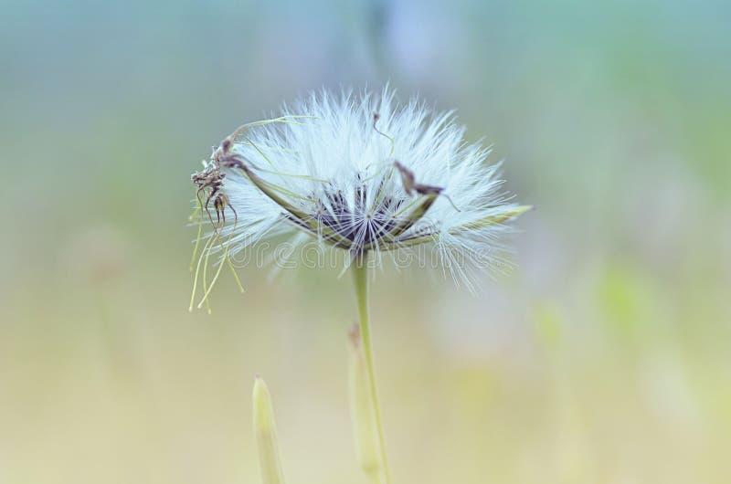 Цветок красоты полный стоковая фотография
