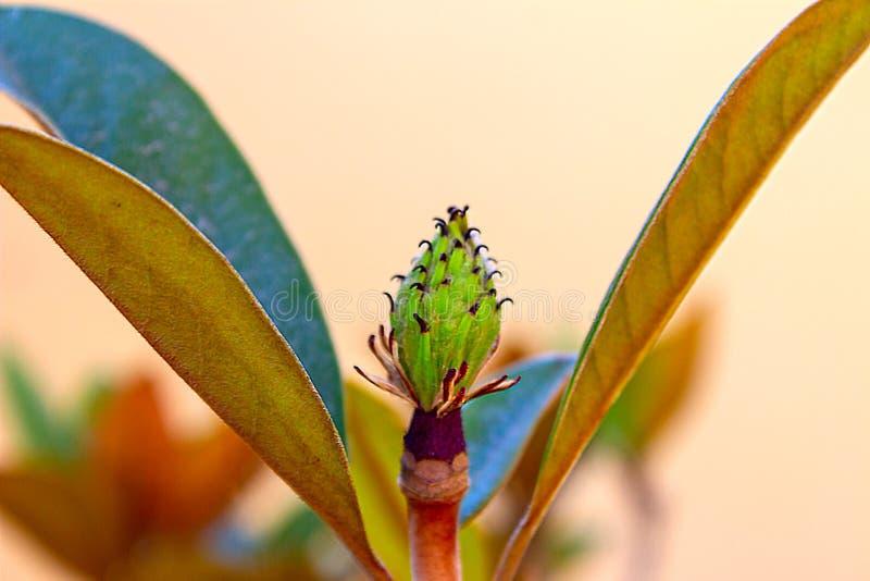 Цветок ладони бутона в саде природы стоковые фотографии rf