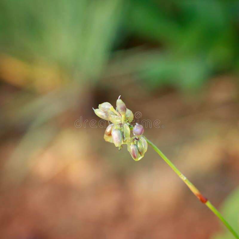 Цветок леса с росой в утре стоковое изображение rf