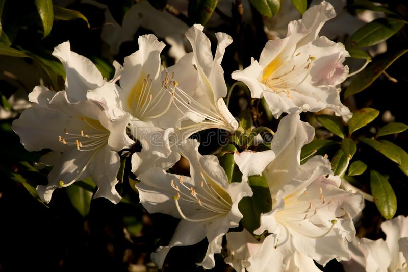Цветок леса стоковое изображение