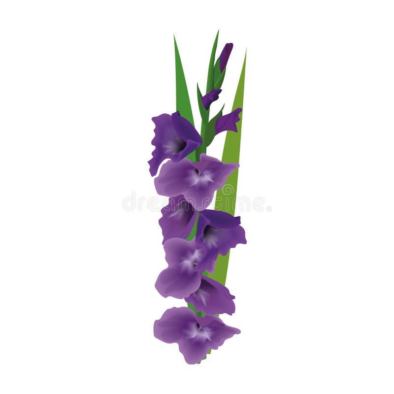 Цветок лилии гладиолуса или шпаги также вектор иллюстрации притяжки corel пурпурный фиолетовый изолированный пук иллюстрация штока